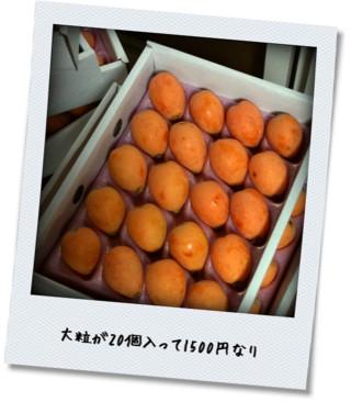 biwa_gft.jpg